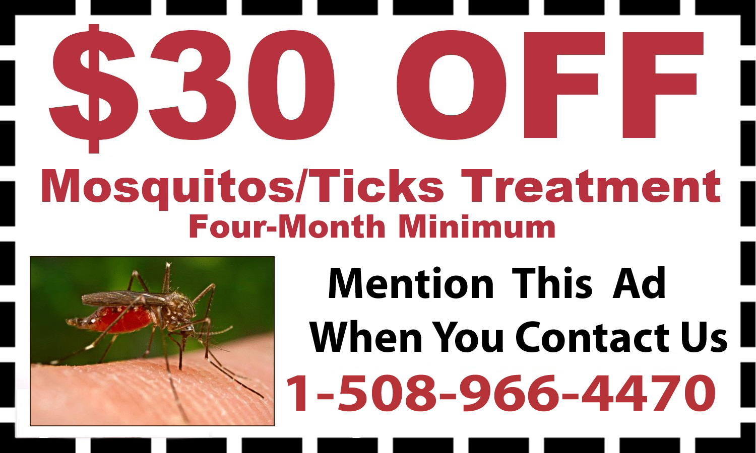 Mosquito Removal in Needham MA