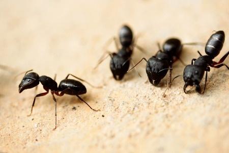 Ant Exterminator in Hopkinton MA