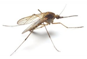 Mosquito Treatment for Yard - Needham MA