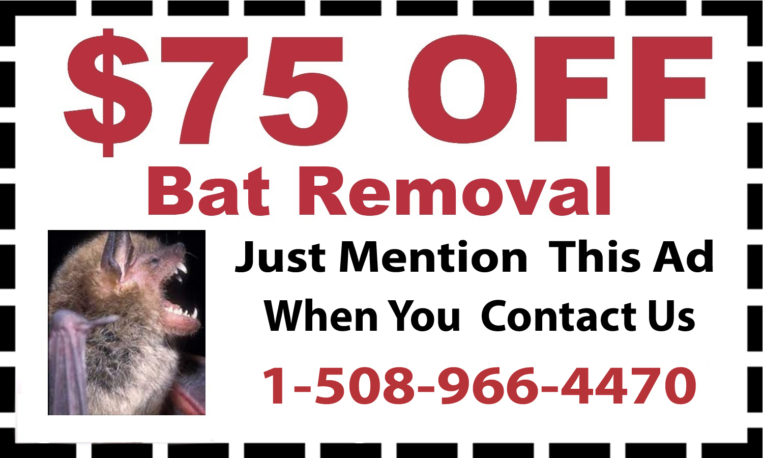 Bat Removal Natick, MA
