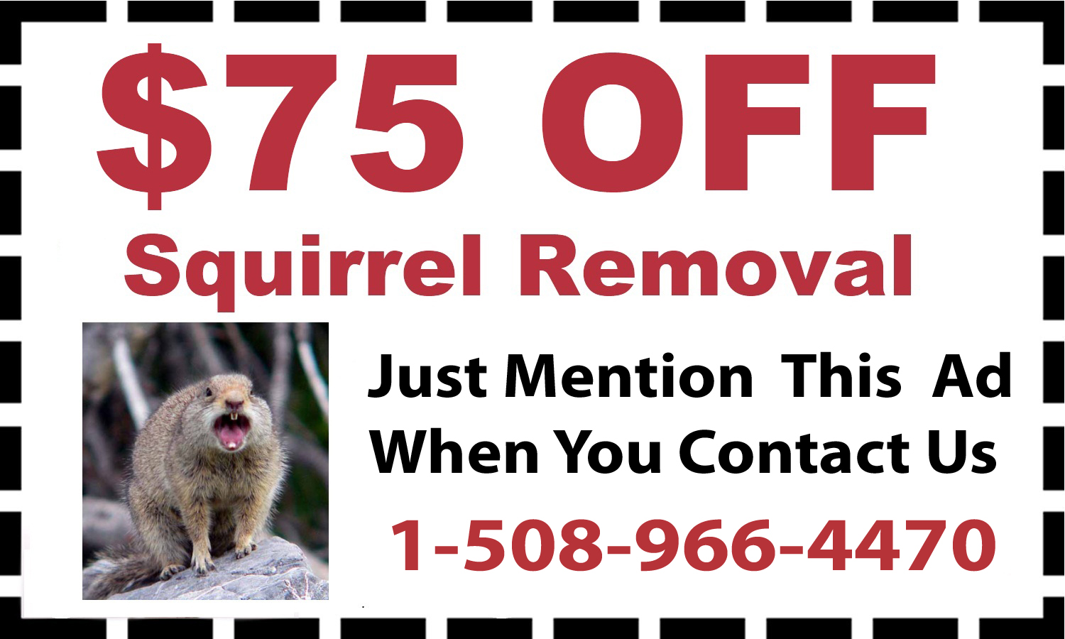 Squirrel Removal Services in Attleboro MA