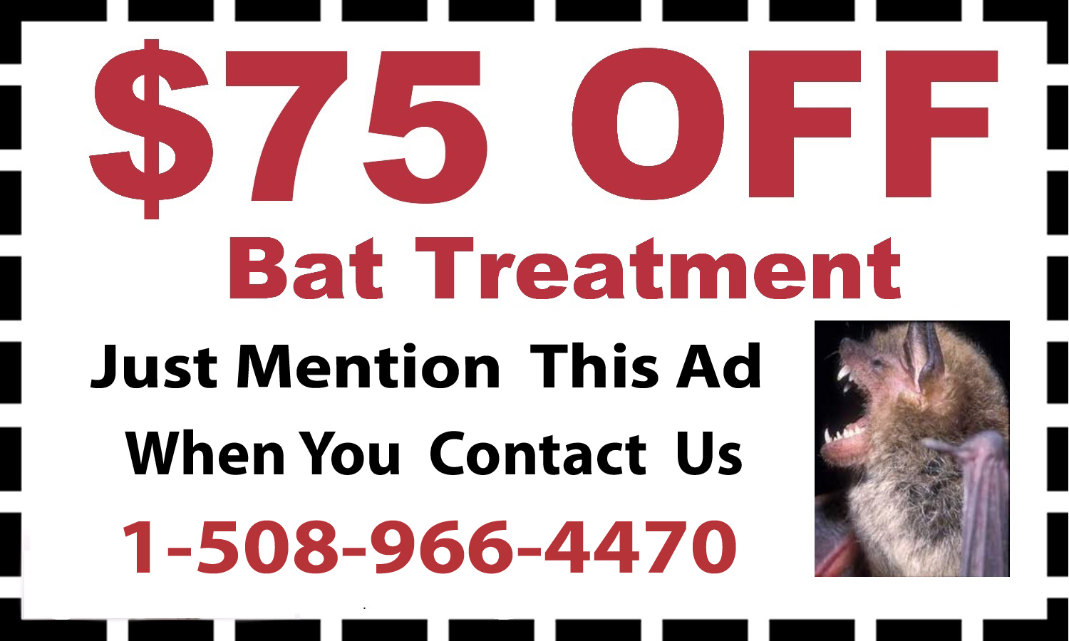 Bat Removal in Natick MA