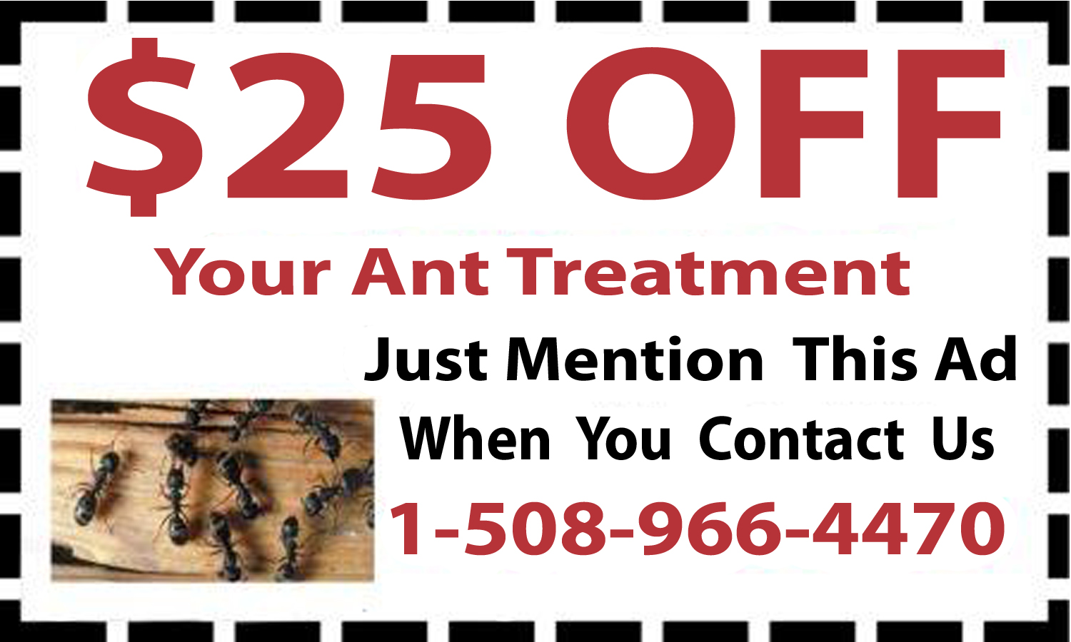 Cumberland, MA Ant Removal Coupon